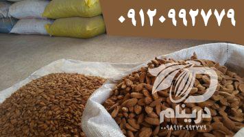 Distributing mamra almond kernel in bulk