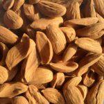 wholesale price of Iranian Mamra almonds