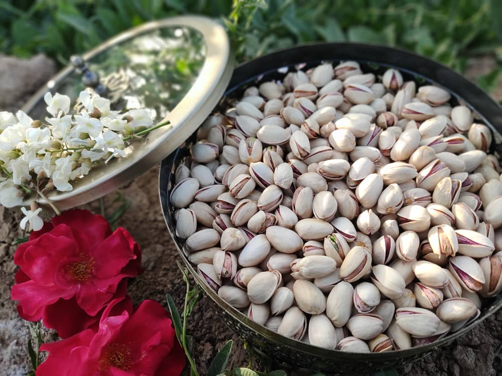 Major Supplier of Iranian raw Pistachios | Nutex Pistachio Nuts